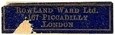 Rowland Ward, London, England (27mm x 8mm). Courtesy of S. Loreck.